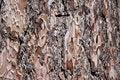 Free Tree Bark Royalty Free Stock Photos - 20813548