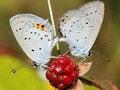 Free Moths Royalty Free Stock Image - 20814116