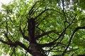 Free Spooky Tree Stock Image - 20814161