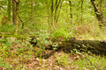 Free Rotting Tree In Woodland Stock Photography - 20814162