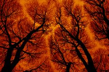 Abstraction In Fiery Colors Stock Image