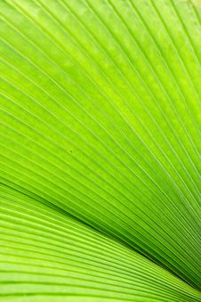 Free Convergent Greens Stock Image - 20810751