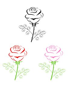 Free Rose Royalty Free Stock Photography - 20812087