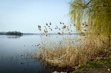 Free Peace On The Lake Stock Photography - 20812162