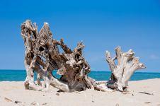 Free Stump On The Beach Stock Photography - 20812502