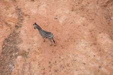 Free Zebra In The Bird Eye S Views Stock Photo - 20812570