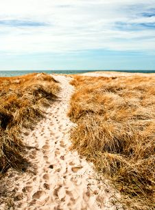 Free Dune Of Denmark Stock Photo - 20812810