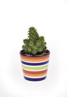 Free Cactus In Rainbow Pot Stock Photography - 20812952