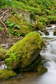Free Stream In A Mountain Forest Stock Photography - 20813332