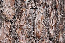Free Tree Bark Royalty Free Stock Photos - 20813548