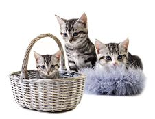 Free Adorable Little Kittens From The Same Litter Stock Photos - 20814003