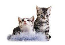 Free Adorable Little Kittens From The Same Litter Stock Photos - 20814013