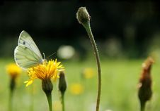Free Butterfly In Meadow Stock Images - 20814124