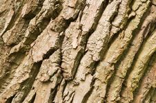 Free Old Tree Bark Royalty Free Stock Photos - 20814168