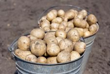 Free Two Buckets With Potatoes Stock Photography - 20814992