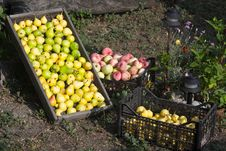 Free Fruit Harvest 01 Stock Images - 20815024