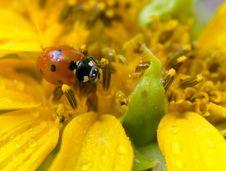 Free Ladybird Stock Photography - 20815092