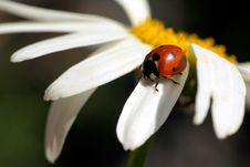 Free Ladybird Royalty Free Stock Photos - 20815138