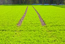 Free Tire Path In Field Royalty Free Stock Images - 20818429