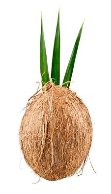 Free Coconut With Leaves Stock Photos - 20818433