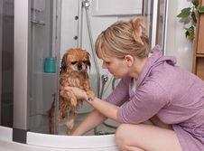 Free The Girl Washes A Dog Royalty Free Stock Photos - 20819118