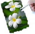 Free Paint Stock Photos - 20824393