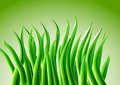 Free Abstract Grass Background Royalty Free Stock Images - 20828189