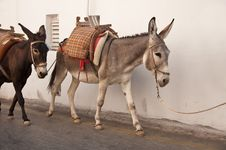 Free Two Donkeys Stock Photo - 20820150