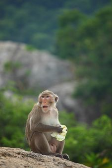 Free Monkey Sitting On The Rock Mountain Royalty Free Stock Photography - 20822497