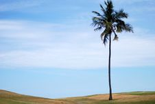 Free Lonely Palm Tree Royalty Free Stock Images - 20823139