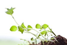 Free World Of Small Plant Royalty Free Stock Photo - 20823165