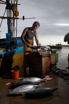 Free The Fish Market In Sri Lanka Royalty Free Stock Photo - 20823695