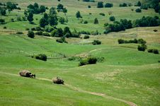 Free Green Rolling Hills And Farmers Collecting Hay Royalty Free Stock Photos - 20824608