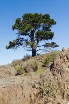 Free Lone Tree Stock Image - 20827151