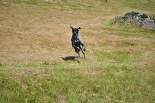 Free Flying Dog Stock Photos - 20827153