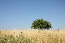 Free Tree Royalty Free Stock Image - 20827166