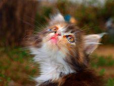 Free Dreaming Kitten Royalty Free Stock Photo - 20827565