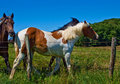 Free Horses And Colts Free Royalty Free Stock Images - 20834469