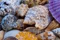 Free Colourful Sea Shells Royalty Free Stock Image - 20836336