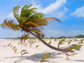 Free Caribbean Beach. Royalty Free Stock Images - 20836369