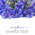 Free Beautiful Blue Cornflower Stock Photography - 20838252