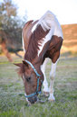Free Beautiful Horse Royalty Free Stock Images - 20839309
