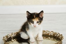 Free Calico Kitten Royalty Free Stock Photography - 20830737