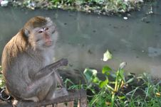 The Monkey Hope Royalty Free Stock Photography
