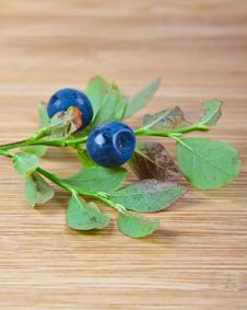 Free Blue Berries In The Forest Royalty Free Stock Photo - 20832245