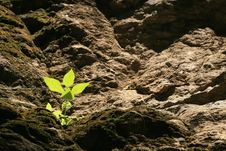 Free Small Plant Is Shined On The Hill Layer Royalty Free Stock Images - 20832319