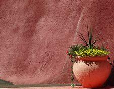 Free Southwestern Garden Stock Images - 20832654