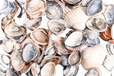 Free Shells, Background Royalty Free Stock Photos - 20832848