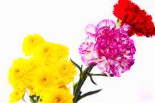 Free Colorful Flower Isolate On White Royalty Free Stock Image - 20834406
