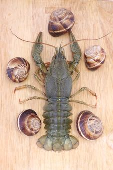 Free Crayfish On A Wood With Snails Royalty Free Stock Photos - 20834538